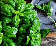 Basilico, proprietà e ricette