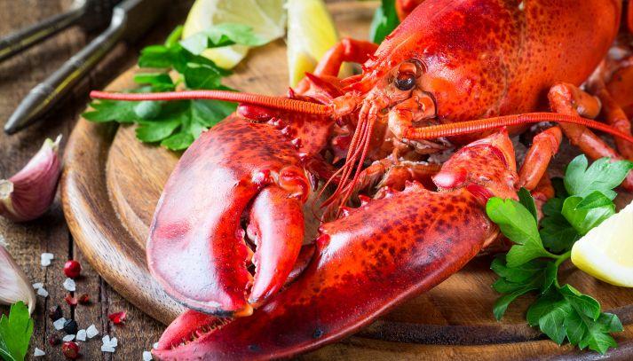 Aragosta, caratteristiche e ricette