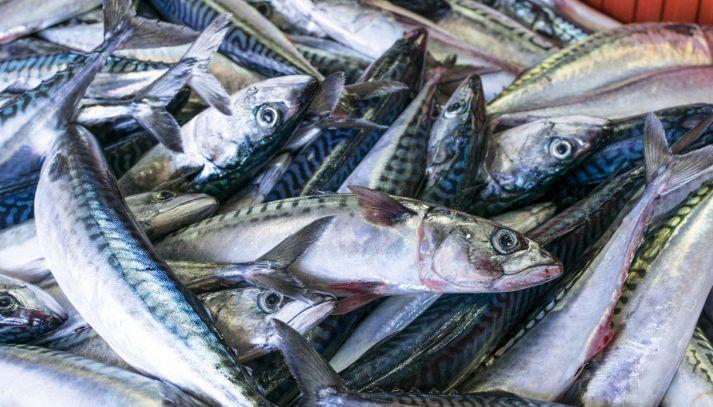 Pesce azzurro: caratteristiche, varietà e ricette