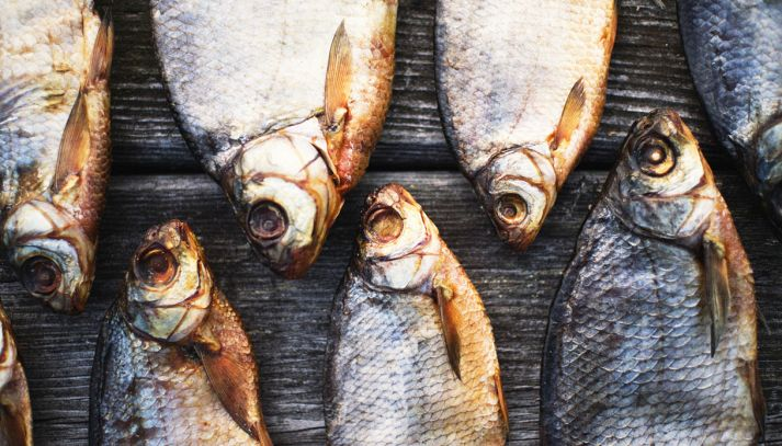 Pesci d'acqua dolce, le specie principali