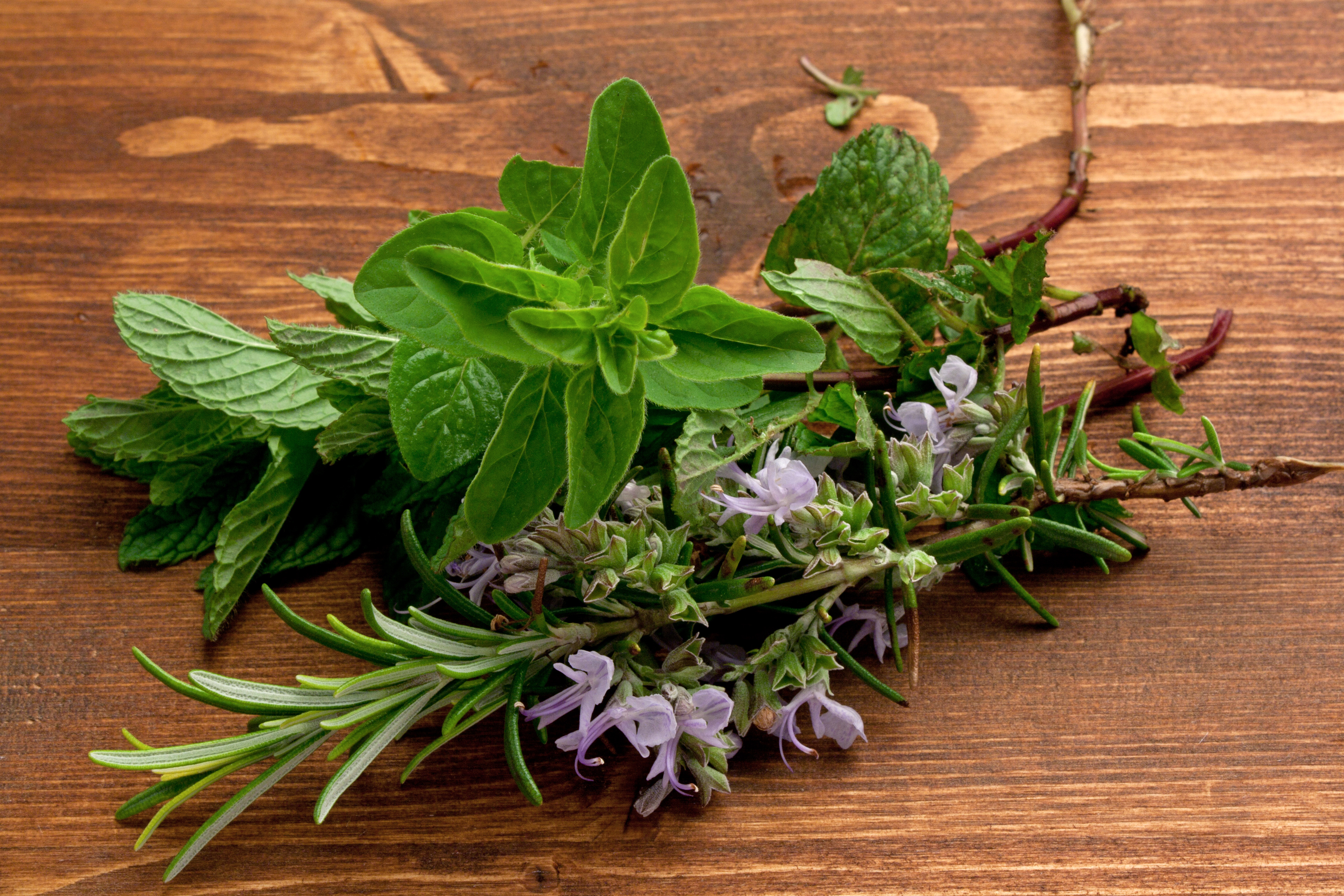 Pianta Simile Al Rosmarino erbe aromatiche - la rubrica di buonissimo