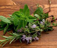Erbe aromatiche, l'elenco completo