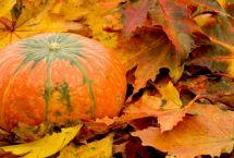 Dieta d'autunno: cosa è meglio mangiare
