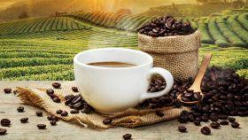 Caffè, caratteristiche e ricette