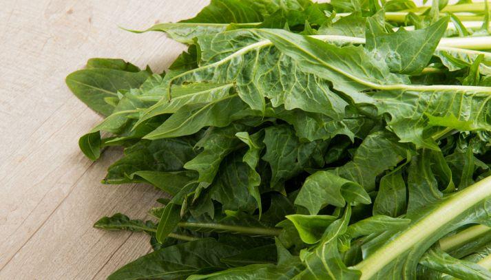 La cicoria, le qualità dell'insalata amara