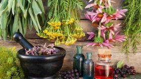 La dieta con le erbe medicinali