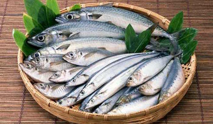 Teniamoci In Forma Con Il Pesce Azzurro La Rubrica Di Buonissimo