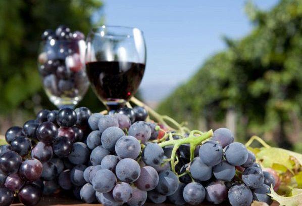 I vini DOC del Lago di Garda in Lombardia