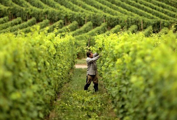 I vini DOC di Campobasso nel Molise