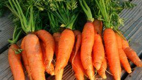Il sapore delle verdure, rendiamolo unico