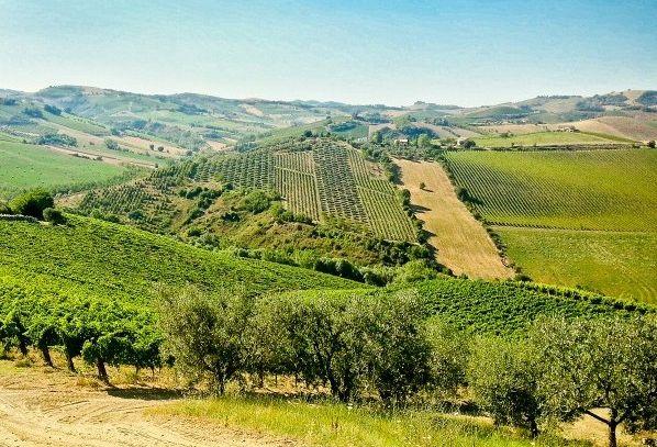 I vini DOC di Ascoli Piceno nelle Marche