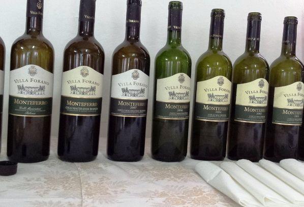 I vini DOC di Macerata nelle Marche