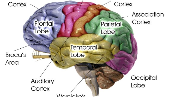 Il segreto per dimagrire? Educare il cervello