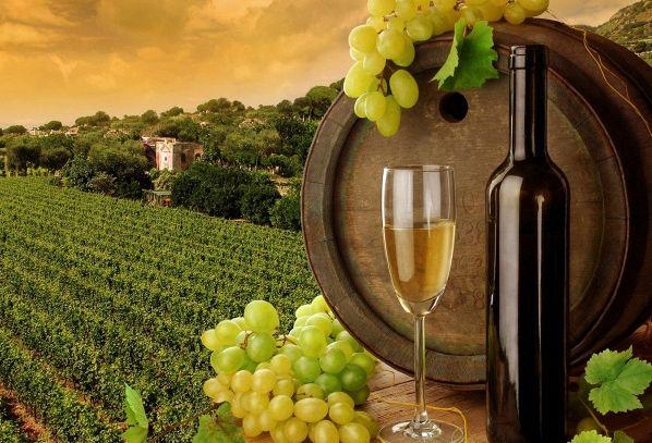 I vini DOC di Belluno nel Veneto