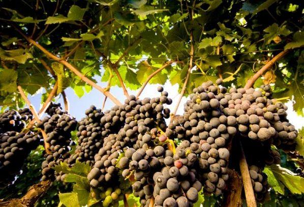 I vini DOC di Lecce in Puglia