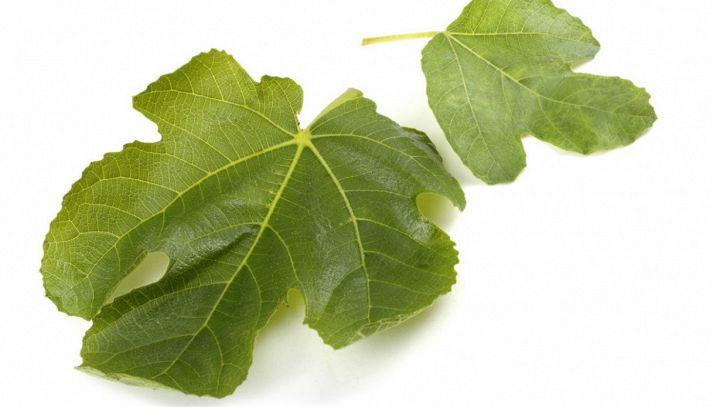 Migliorare il diabete con le foglie di fico