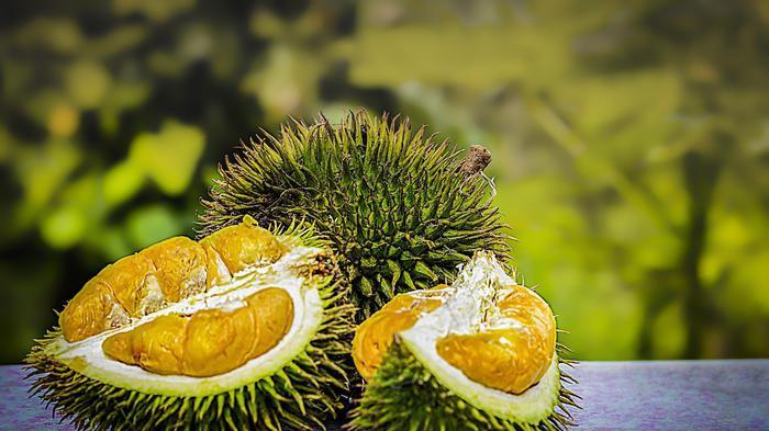 Habitat Tigri Malesia a rischio per boom frutto maleodorante