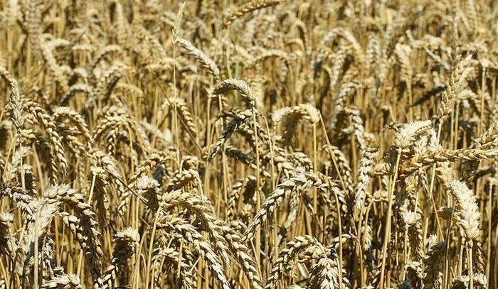 Giornata mondiale della pasta: la ricerca aiuta il Made in Italy