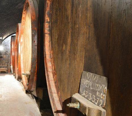Autunno al Muvis, il Museo del Vino più grande d'Europa