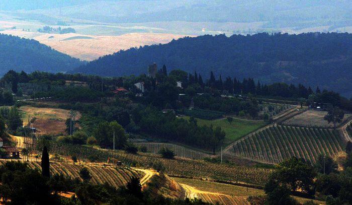 Domenica Camminata tra gli olivi in 122 Città dell'olio
