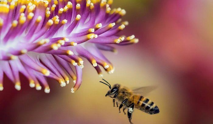 L'ape protagonista di un convegno internazionale sul Garda