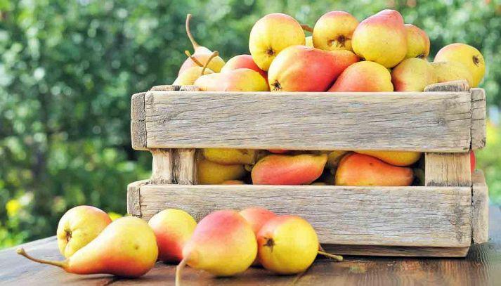 Una pera al giorno toglie i chili di torno