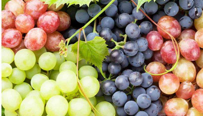 Le virtù benefiche dell'uva