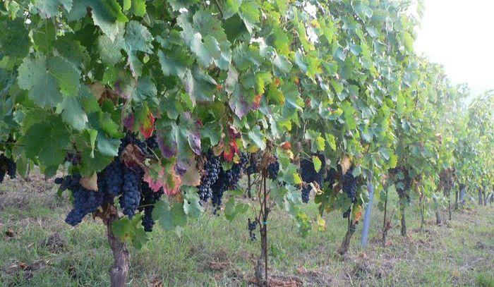 Lombardia, 3,5 milioni per i progetti d'internazionalizzazione del vino