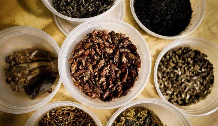 Quattro italiani su 10 pronti a mangiare gli insetti