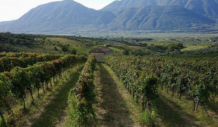 Città Europea del Vino, il Sannio-Falanghina inizia da Napoli