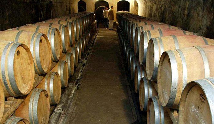 Dagli scarti della filiera del vino energia pulita, meno costi in cantina