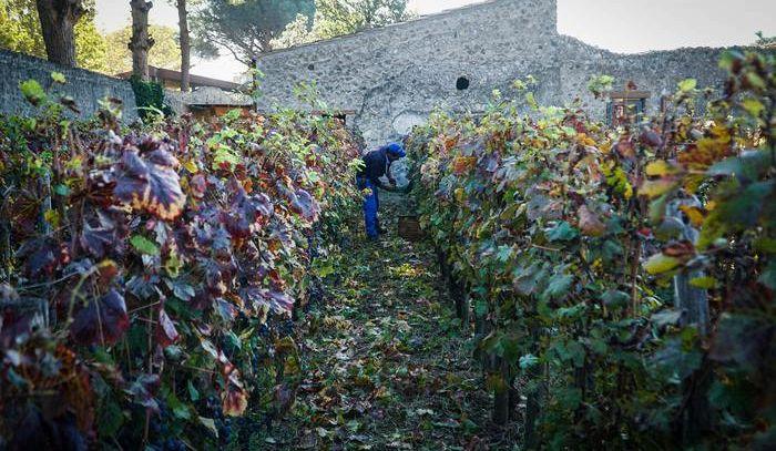 Dallo scarto del vino energia pulita e meno costi in cantina