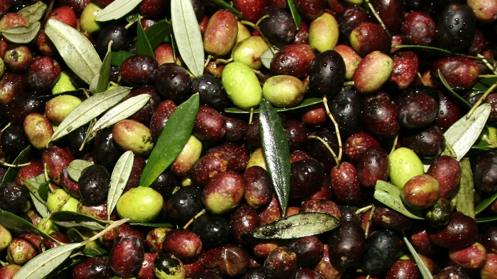 A Roma corso per esperti in analisi olio d'oliva