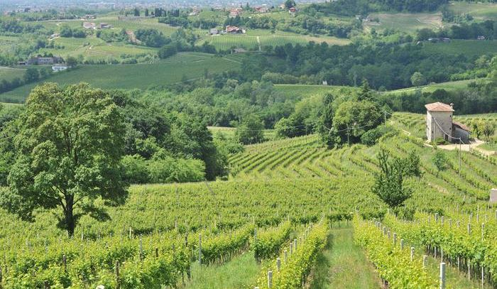 Consiglio Veneto, via libera a candidatura Unesco Prosecco