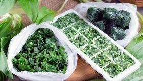 Come conservare il basilico fresco per l'inverno