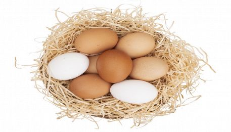 Da cosa dipende il colore del guscio delle uova di gallina