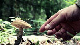 Funghi: come e dove si raccolgono. I consigli utili