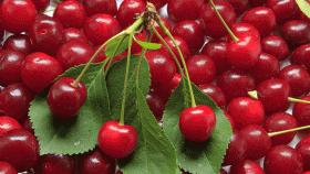 Il mese delle ciliegie: i migliori dolci