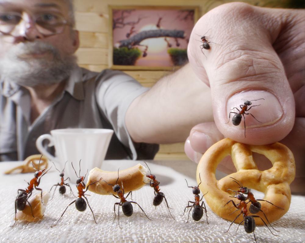 Casa infestata dalle formiche? Ecco come eliminarle definitivamente