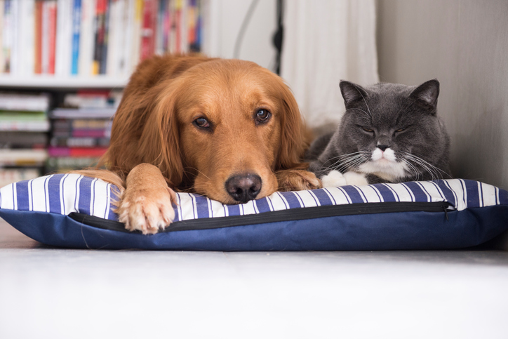Meglio cane o gatto da tenere in casa?