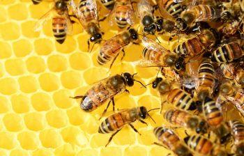 Il canto segreto dell'ape regina