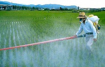 Celiachia, casi raddoppiati: la colpa potrebbe essere di un pesticida