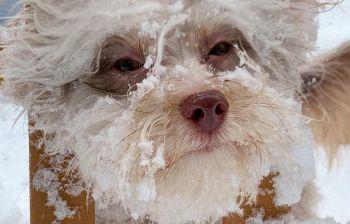 Nori, il cane dall'inquietante volto umano ha migliaia di followers