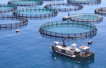 Allevamenti ittici: quando