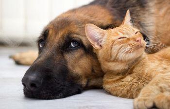 Regole di condominio: si possono vietare gli animali?