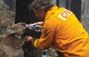 Dopo i koala toccherà ad altri animali, altri ecosistemi e a noi
