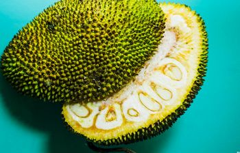 Giaca, il frutto che sa di carne che può salvare le aree povere