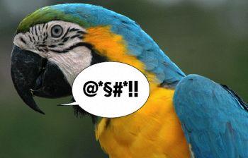 Lo strano caso dei pappagalli bestemmiatori