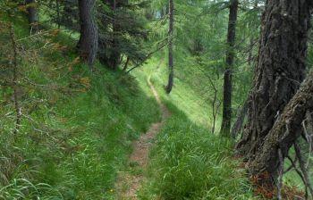 Cronache dall'Elba: pensavo di essere l'unico pazzo a vivere nel bosco...