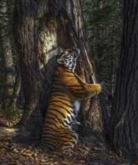 Wildlife Photographer of the Year 2021: le più fotografie della natura a Bard